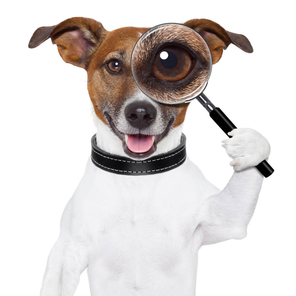 Dog with a magnifying glass